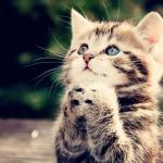 Нашли котенка на Бали? Что делать? (Моя история)