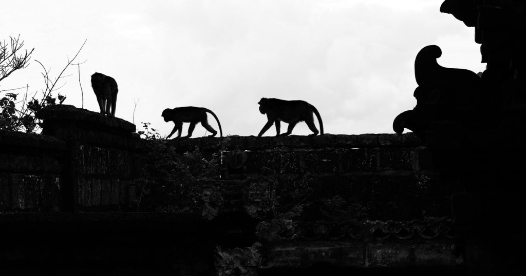 храм обезьян бали