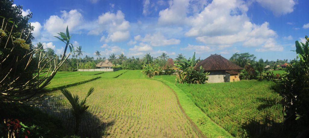 По визе 211 можно прилететь на Бали и поселиться жить в таком красивом месте